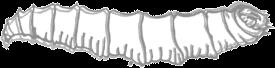 maggothand